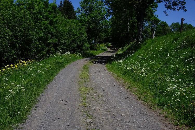 Entre Cère et Goul à Badailhac
