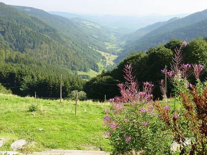 Vallée petite Liepvre