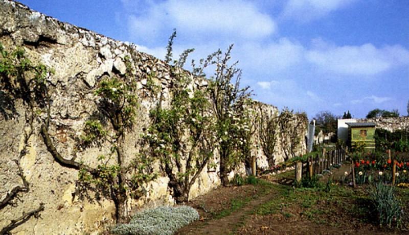 Les murs à pêches de Montreuil