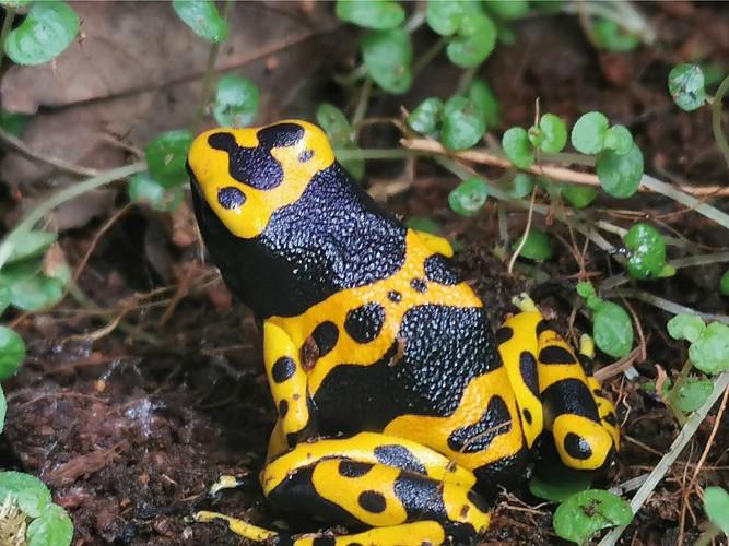 Exotic Park - Lescar