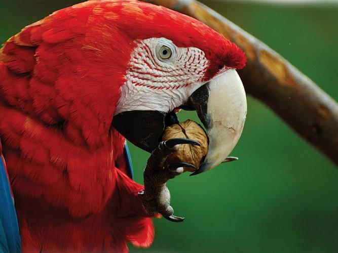 Exotic Park - Lescar - flamands roses