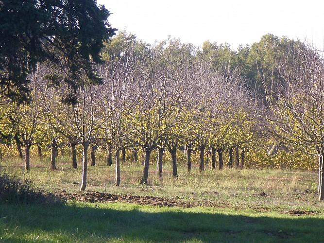 pruniers