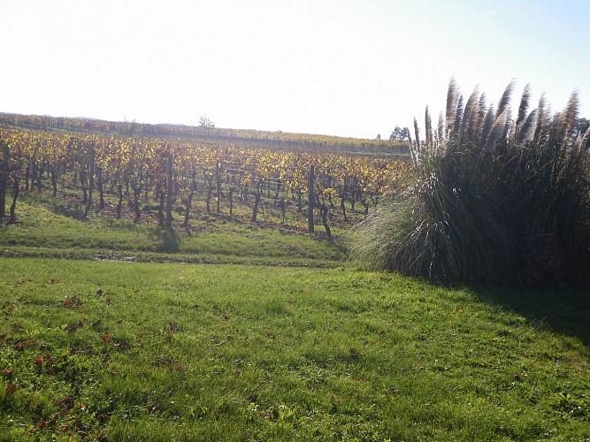 vignes et aire camping-car château du Tastet 2