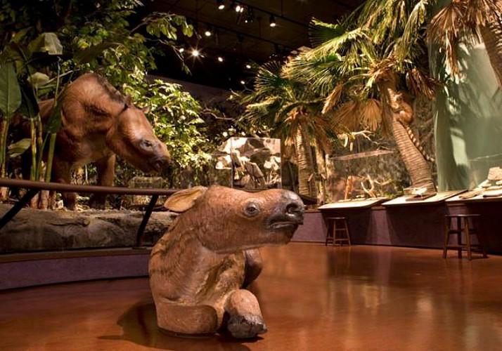 Billet Musée d'Histoire Naturelle - San Diego