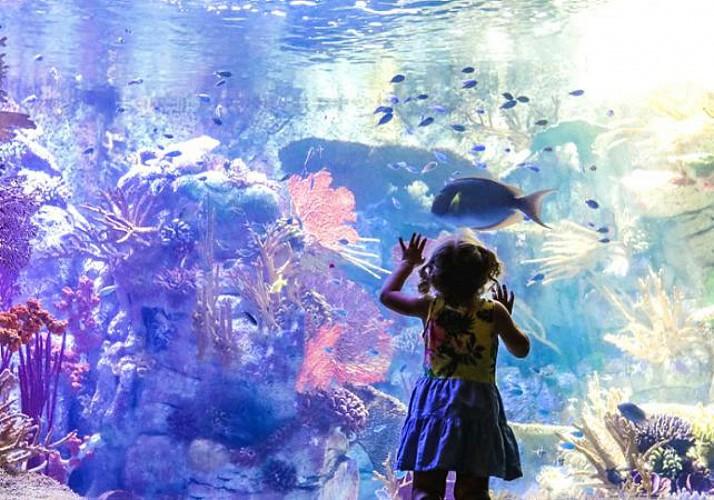 Birch Aquarium Ticket - San Diego