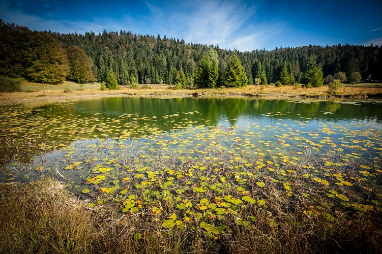 Lac Genin et ses tourbières, ENS de l'Ain