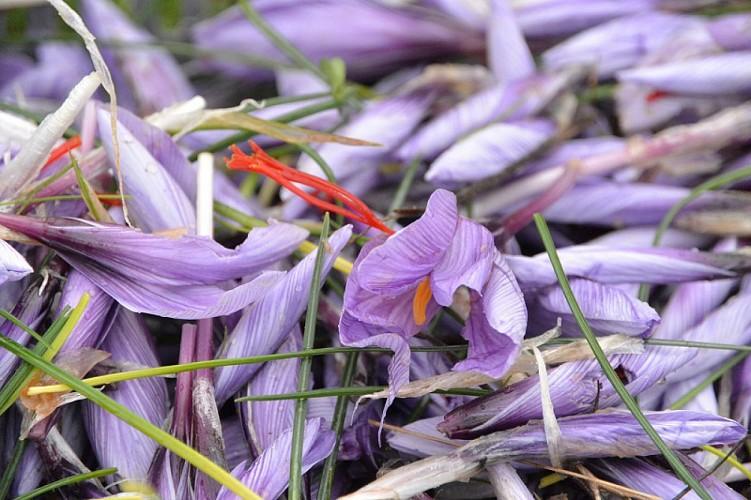 Jardins-gourmands-Tourouge-fleurs