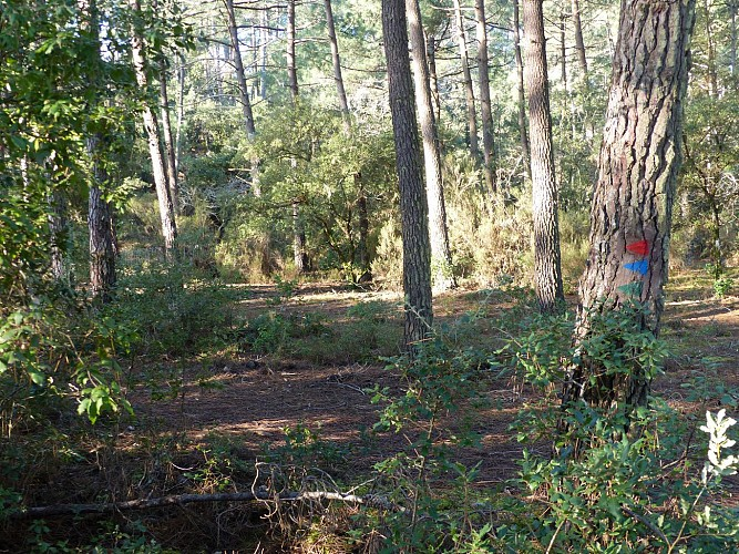 La forêt mixte