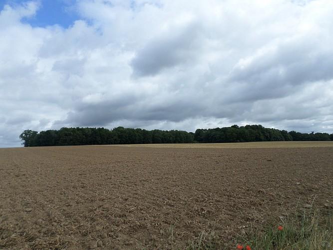 Bois de Horne