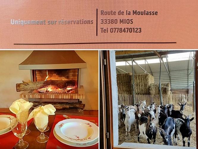 Ferme-de-La-Moulasse-interieur