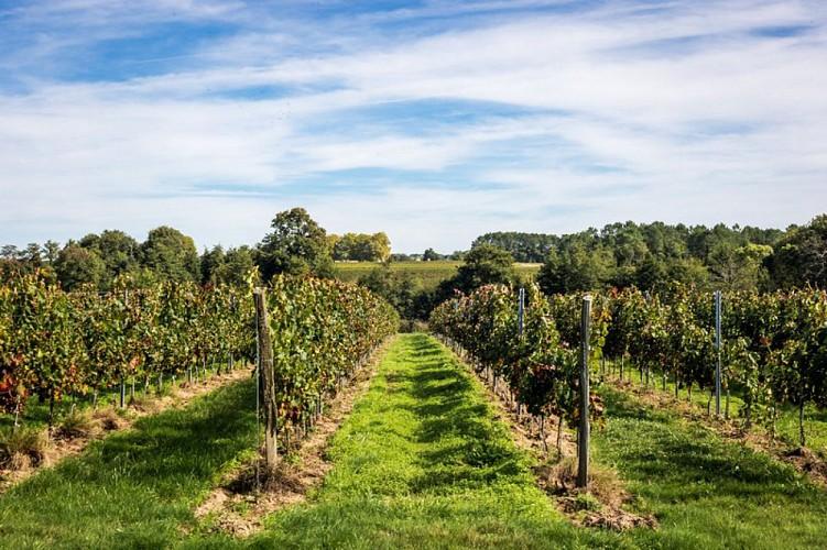 Le vignoble des Blaye Côtes de Bordeaux