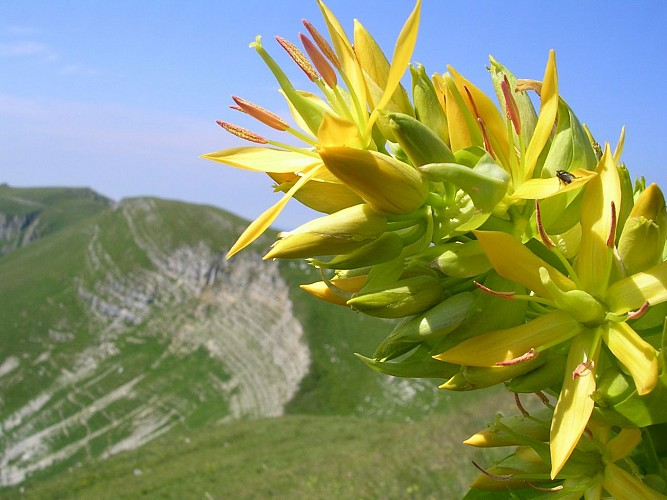 Réserve Naturelle Nationale de la Haute Chaîne du Jura