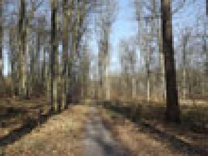 Route des fossés rouges