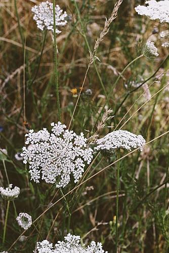 Fleurs au Parc naturel Viroin-Hermeton à Viroinval