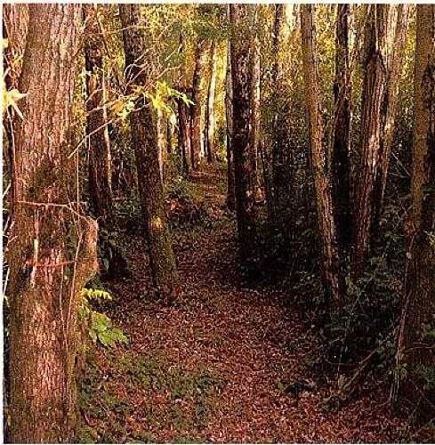 Sentier ombragé et vallonné
