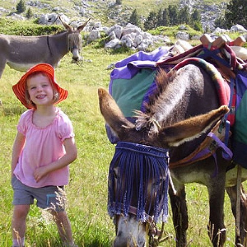 Rando d'âne du Vercors