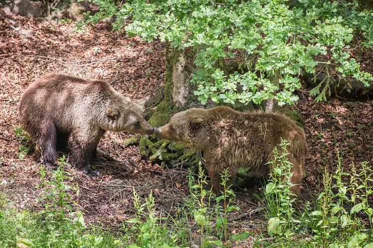 Forestia - Theux - Parc animalier - Deux ours