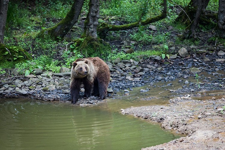 Forestia - Theux - Parc animalier - Ours