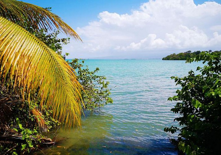 Kayak Excursion in the Guadeloupean Mangroves