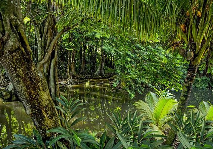 Balade en kayak dans la mangrove guadeloupéenne - Au départ de Vieux-Bourg