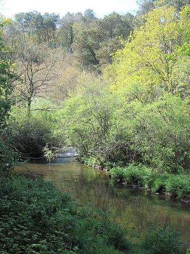 Plougoumelen Bois de Pont-Sal