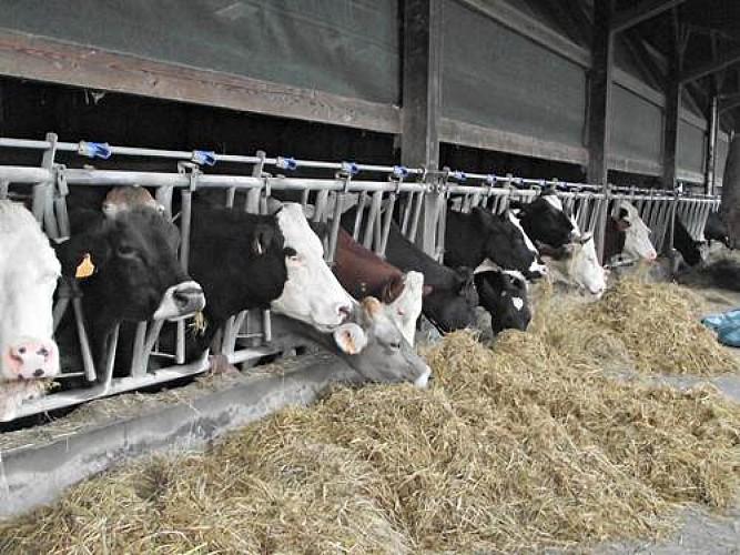 FERME DU BIAÙ CHEMIN DES LANDES