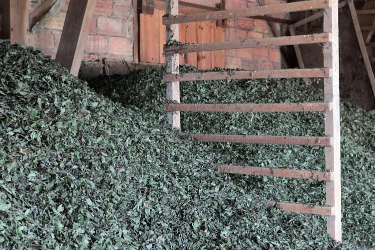 Clos d'Artois peppermint farm