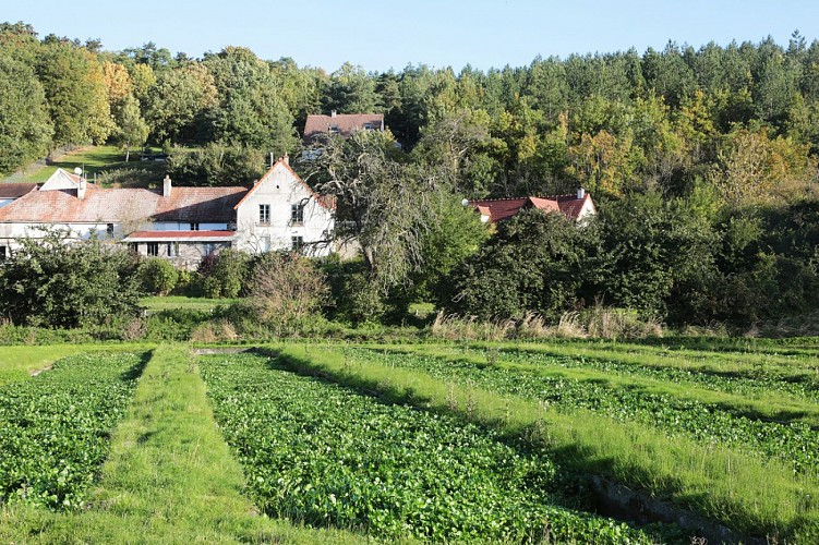 Moulin Vaux's Watercress