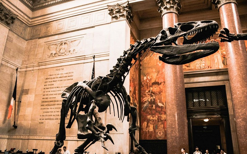 American Museum of Natural History Admission Tickets