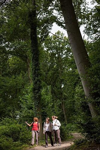 Point 4 : en forêt