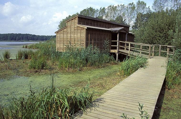 Observatoire ornithologique de l'Etang du Grand Coulon - Nord