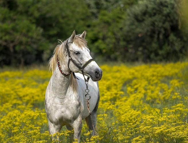 A cheval en Champagne