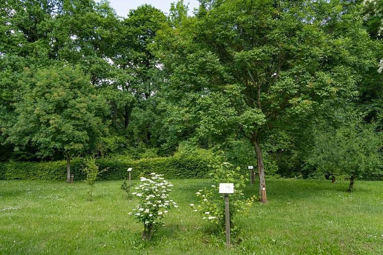 Parcours sportif et Arboretum du Mesnil-sur-Oger
