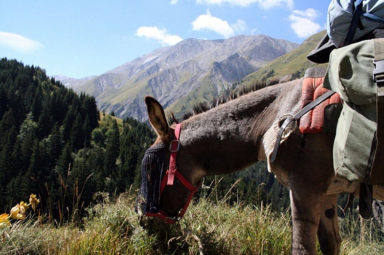Walk in forest with donkeys