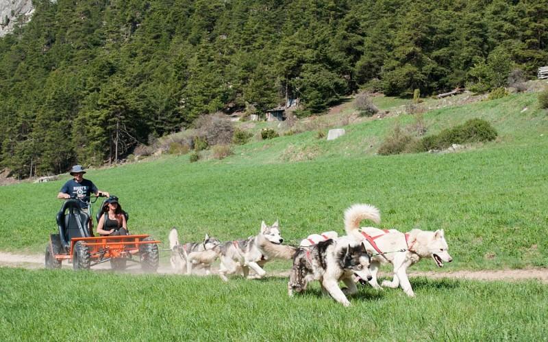 Dogs kart tandem ride