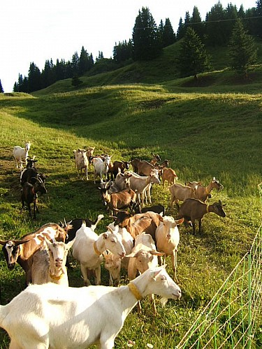 Alpage de la Vieille Mountain pasture