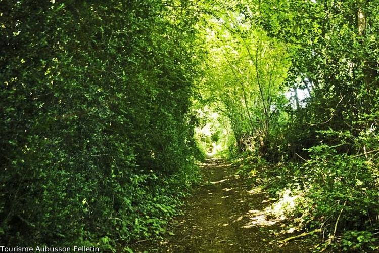 Chemins des buis