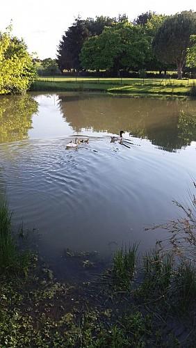Gîte-Martin-St -Martin-De-Gurson canards-étang