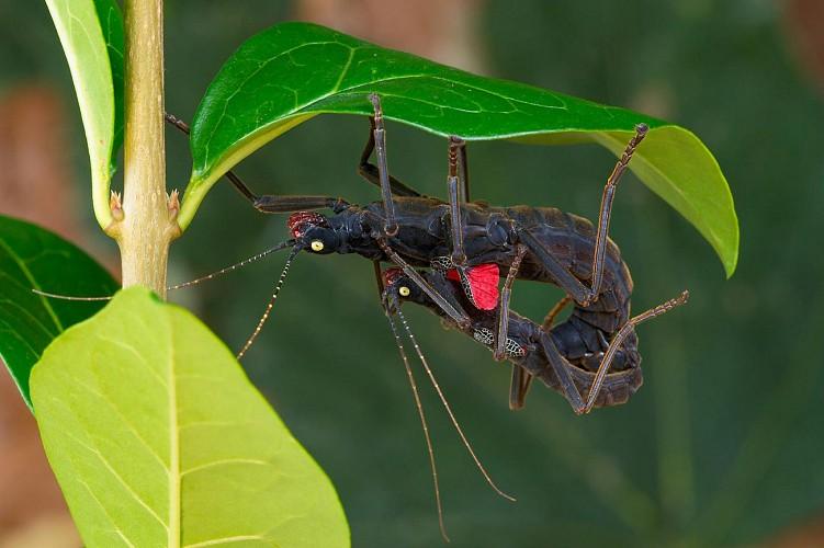 Jardin entomologique (1ère partie)