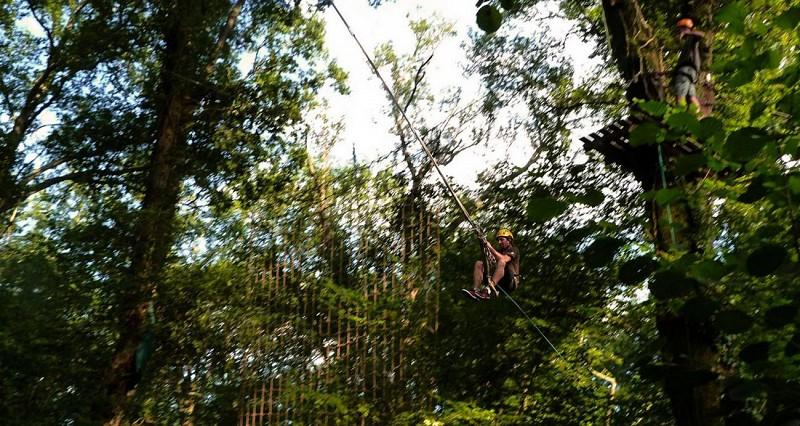 La forêt des Vert'tiges