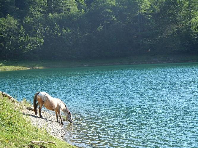 Chevaux du Lac - Accompagnement équestre