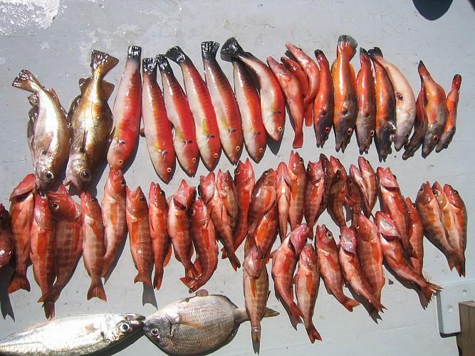 Bateau Hendayais II - Pêche en Mer