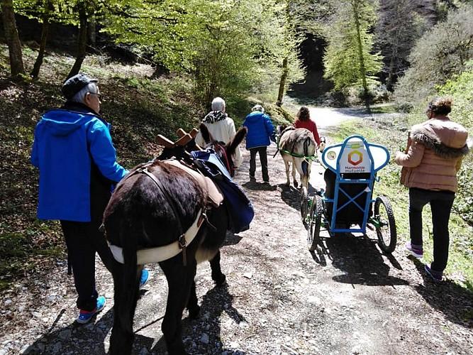 Petits Pas - Randonnées en âne
