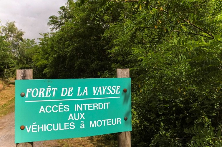 Le cynodrome et la forêt de la Vaysse