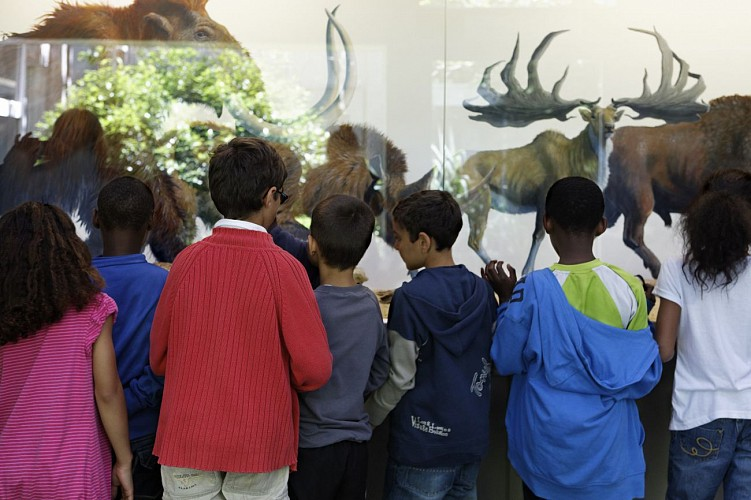 The Ile de France prehistory Museum in Nemours