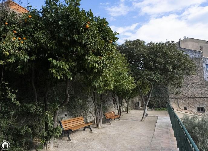 Oranges amères près de l'Office de Tourisme