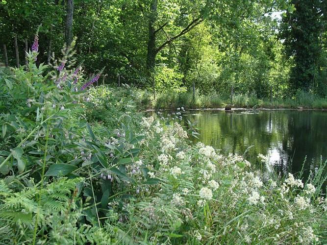 Jardin de Cantoperlic - le jardin aux quatre saisons