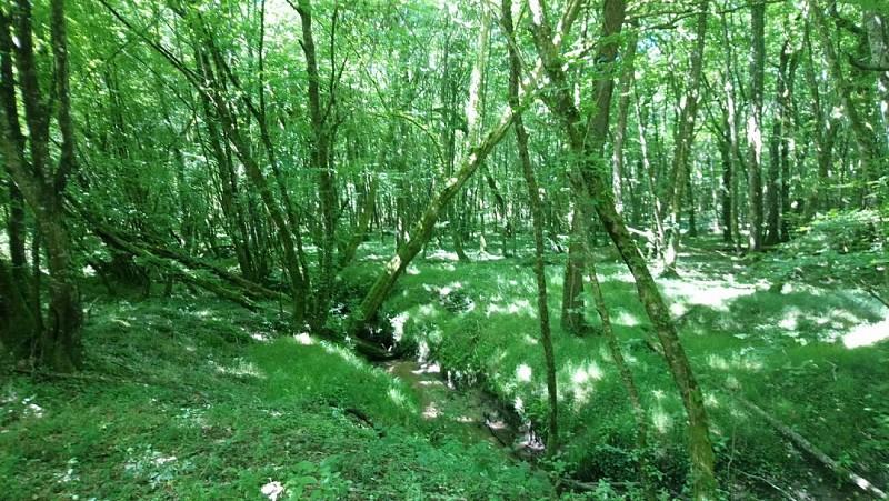 Les Méandres du Boutouyre (ruisseau)