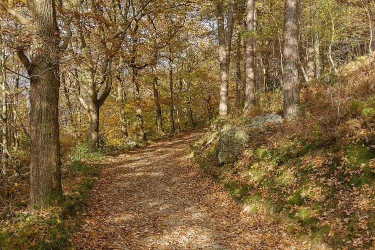 Ninglinspo automne_D8E7270