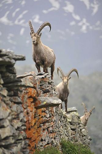 Pierre Descotes - Snowshoeing & Nature Photography